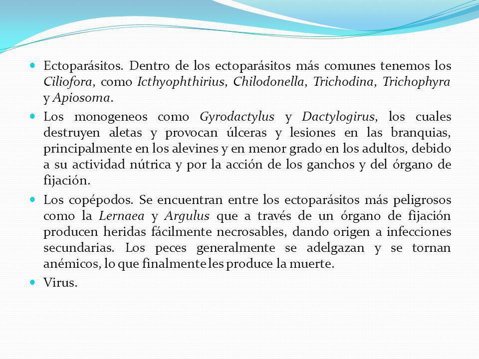 Ectoparásitos.