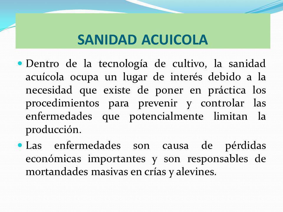 SANIDAD ACUICOLA Dentro de la tecnología de cultivo, la sanidad acuícola ocupa un lugar de interés debido a la necesidad que existe de poner en práctica los procedimientos para prevenir y controlar las enfermedades que potencialmente limitan la producción.