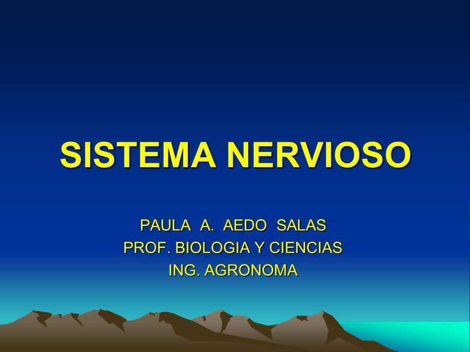 SISTEMA NERVIOSO PAULA A. AEDO SALAS PROF. BIOLOGIA Y CIENCIAS ING. AGRONOMA