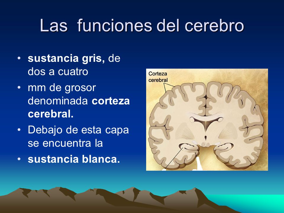 Las funciones del cerebro sustancia gris, de dos a cuatro mm de grosor denominada corteza cerebral. Debajo de esta capa se encuentra la sustancia blan