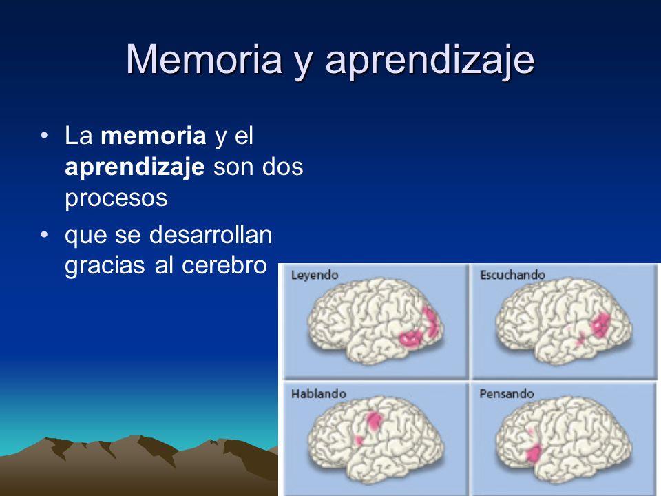 Memoria y aprendizaje La memoria y el aprendizaje son dos procesos que se desarrollan gracias al cerebro
