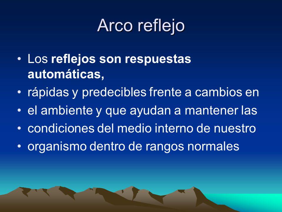 Arco reflejo Los reflejos son respuestas automáticas, rápidas y predecibles frente a cambios en el ambiente y que ayudan a mantener las condiciones del medio interno de nuestro organismo dentro de rangos normales