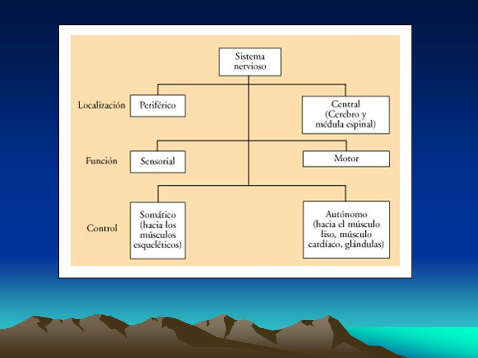 Sistema Nervioso Central: Análisis de información sensitiva. Sistema Nervioso Periférico.