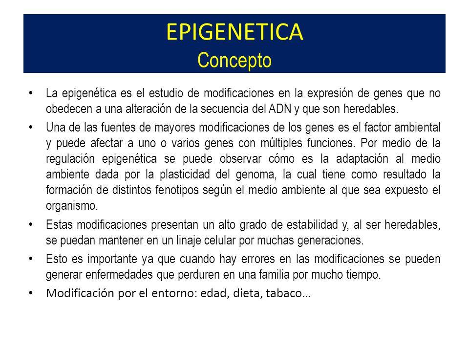 La epigenética es el estudio de modificaciones en la expresión de genes que no obedecen a una alteración de la secuencia del ADN y que son heredables.