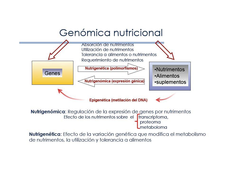 Alimento nutrigenomico
