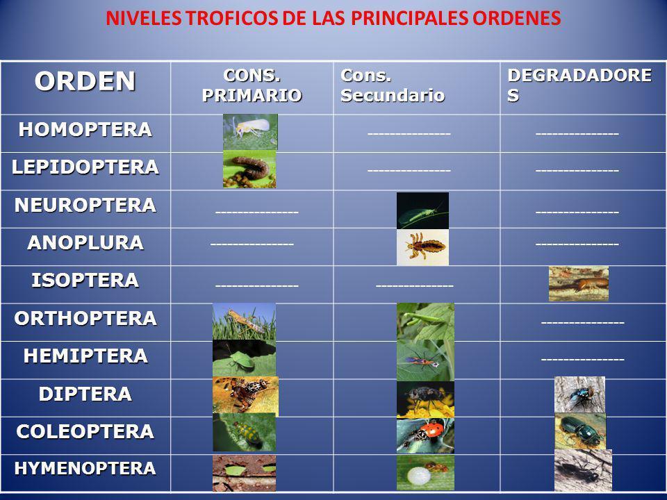 NIVELES TROFICOS DE LAS PRINCIPALES ORDENESORDEN CONS.