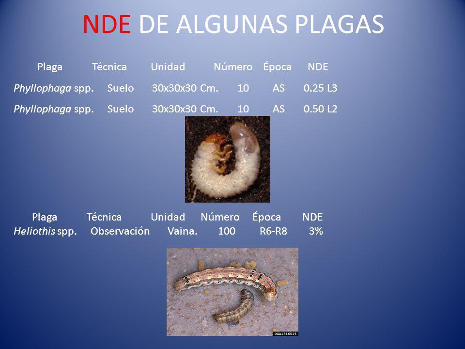 NDE DE ALGUNAS PLAGAS Plaga Técnica Unidad Número Época NDE Phyllophaga spp.