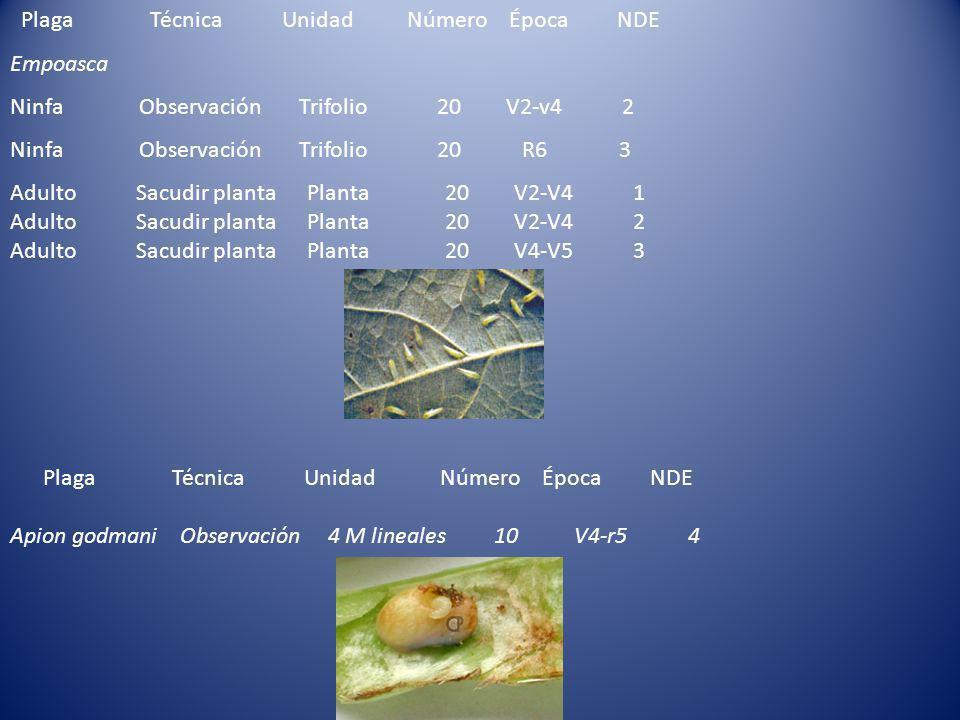 Plaga Técnica Unidad Número Época NDE Empoasca Ninfa Observación Trifolio 20 V2-v4 2 Ninfa Observación Trifolio 20 R6 3 Adulto Sacudir planta Planta 20 V2-V4 1 Adulto Sacudir planta Planta 20 V2-V4 2 Adulto Sacudir planta Planta 20 V4-V5 3 Plaga Técnica Unidad Número Época NDE Apion godmani Observación 4 M lineales 10 V4-r5 4