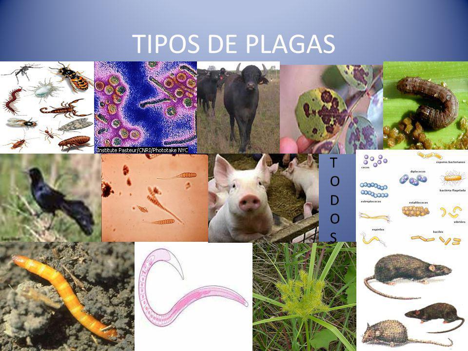TIPOS DE PLAGAS TODOSTODOS