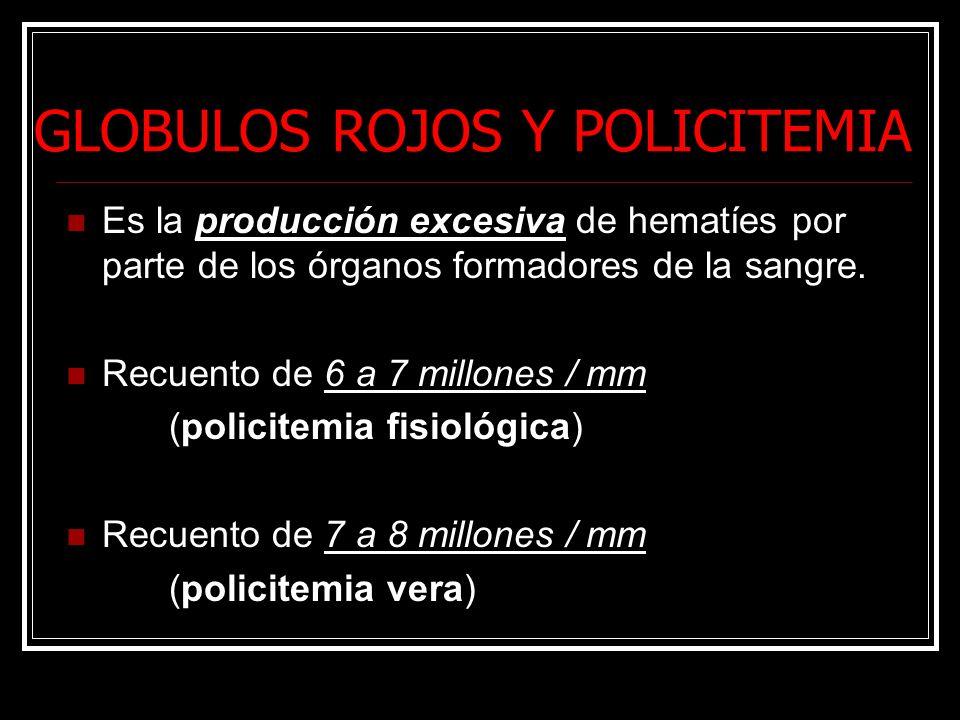 GLOBULOS ROJOS Y POLICITEMIA Es la producción excesiva de hematíes por parte de los órganos formadores de la sangre. Recuento de 6 a 7 millones / mm (
