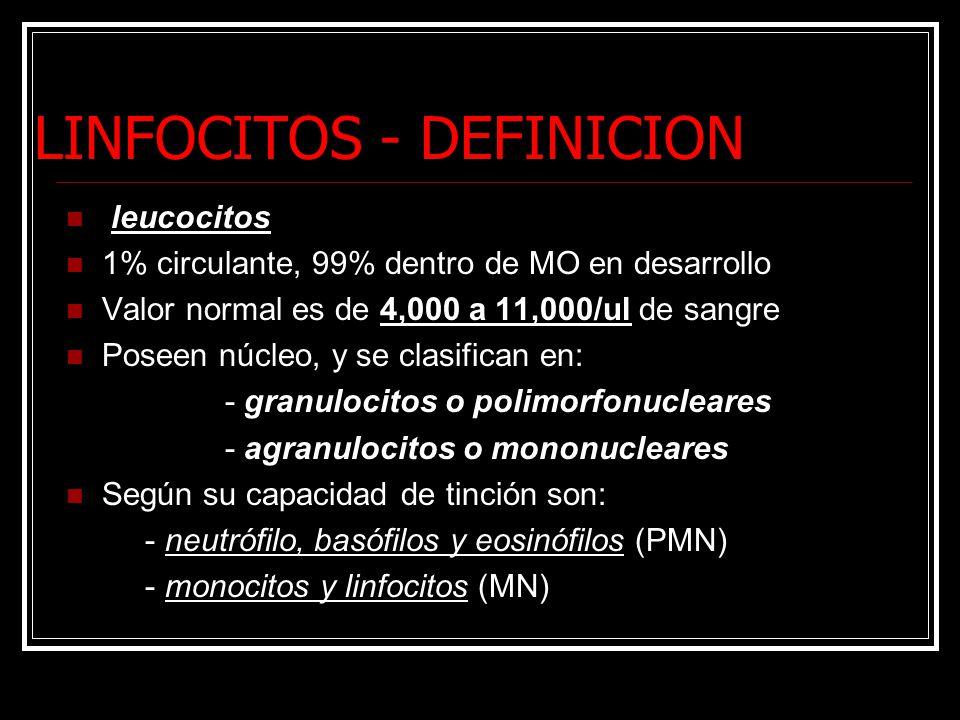 LINFOCITOS - DEFINICION leucocitos 1% circulante, 99% dentro de MO en desarrollo Valor normal es de 4,000 a 11,000/ul de sangre Poseen núcleo, y se clasifican en: - granulocitos o polimorfonucleares - agranulocitos o mononucleares Según su capacidad de tinción son: - neutrófilo, basófilos y eosinófilos (PMN) - monocitos y linfocitos (MN)