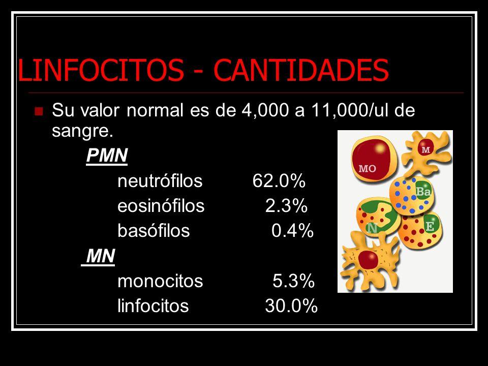 LINFOCITOS - CANTIDADES Su valor normal es de 4,000 a 11,000/ul de sangre. PMN neutrófilos 62.0% eosinófilos 2.3% basófilos 0.4% MN monocitos 5.3% lin