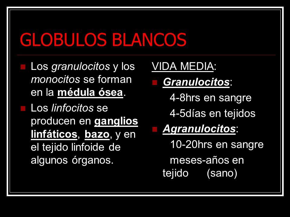 GLOBULOS BLANCOS Los granulocitos y los monocitos se forman en la médula ósea. Los linfocitos se producen en ganglios linfáticos, bazo, y en el tejido
