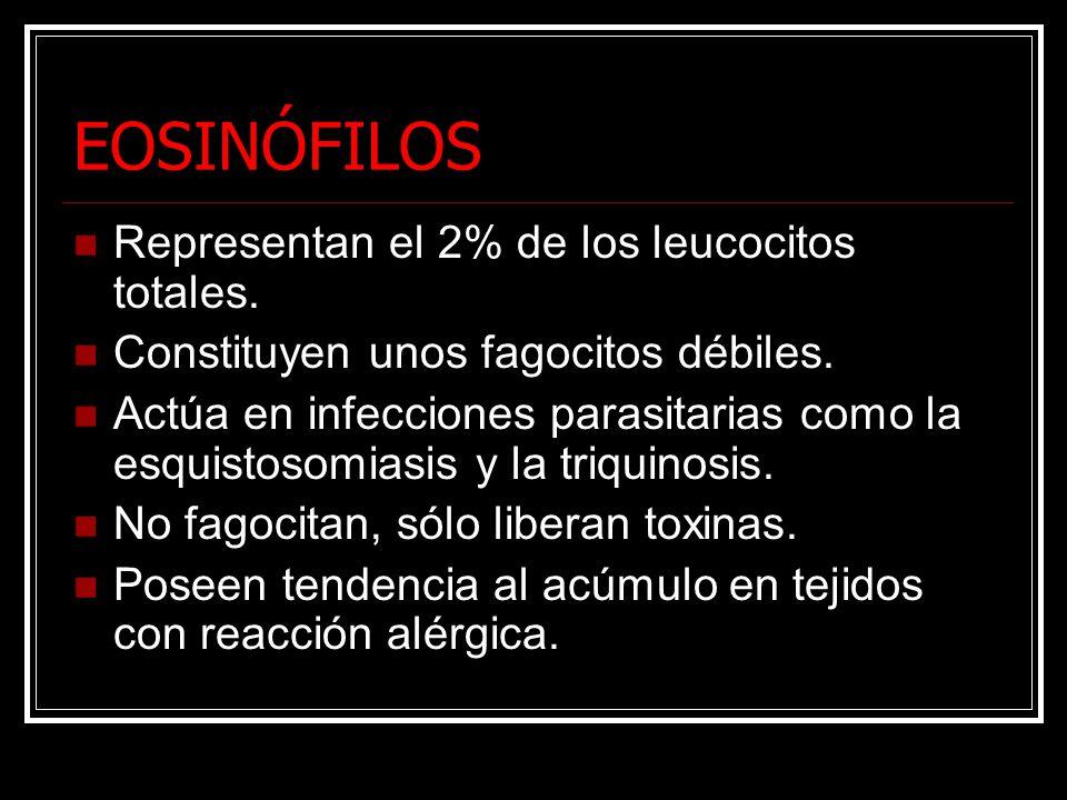 EOSINÓFILOS Representan el 2% de los leucocitos totales.