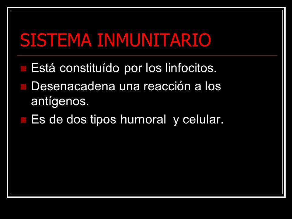 SISTEMA INMUNITARIO Está constituído por los linfocitos. Desenacadena una reacción a los antígenos. Es de dos tipos humoral y celular.