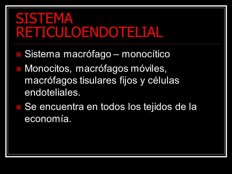 SISTEMA RETICULOENDOTELIAL Sistema macrófago – monocítico Monocitos, macrófagos móviles, macrófagos tisulares fijos y células endoteliales.