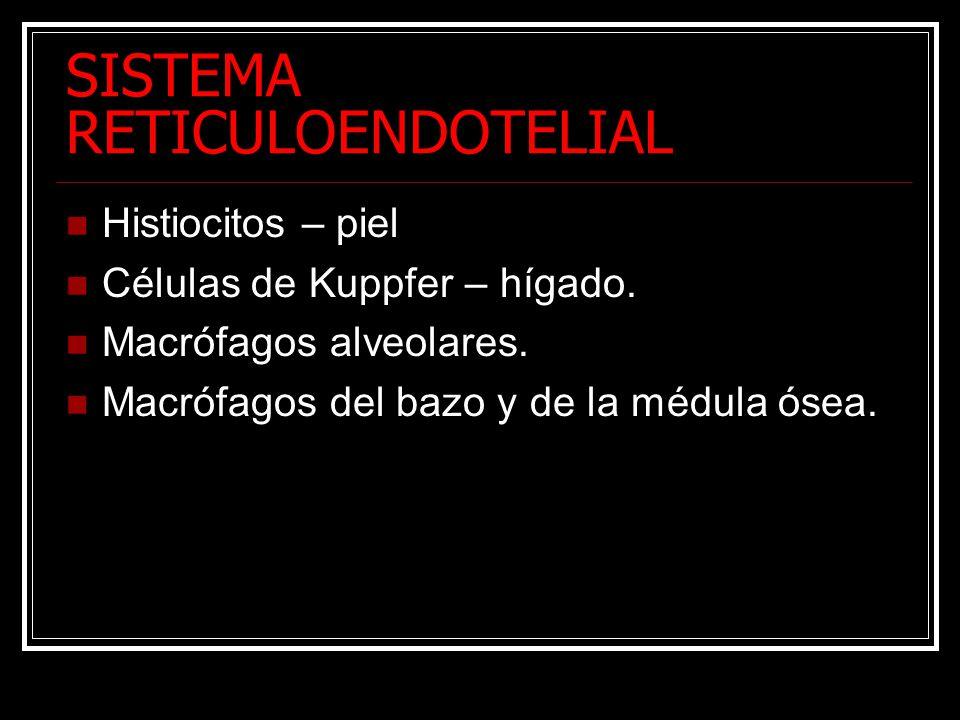 SISTEMA RETICULOENDOTELIAL Histiocitos – piel Células de Kuppfer – hígado. Macrófagos alveolares. Macrófagos del bazo y de la médula ósea.