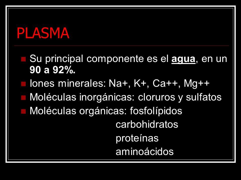 PLASMA Su principal componente es el agua, en un 90 a 92%. Iones minerales: Na+, K+, Ca++, Mg++ Moléculas inorgánicas: cloruros y sulfatos Moléculas o