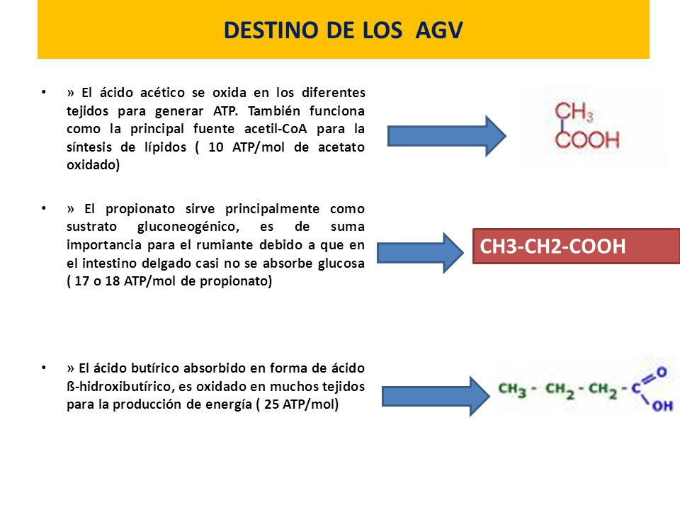 DESTINO DE LOS AGV » El ácido acético se oxida en los diferentes tejidos para generar ATP. También funciona como la principal fuente acetil-CoA para l