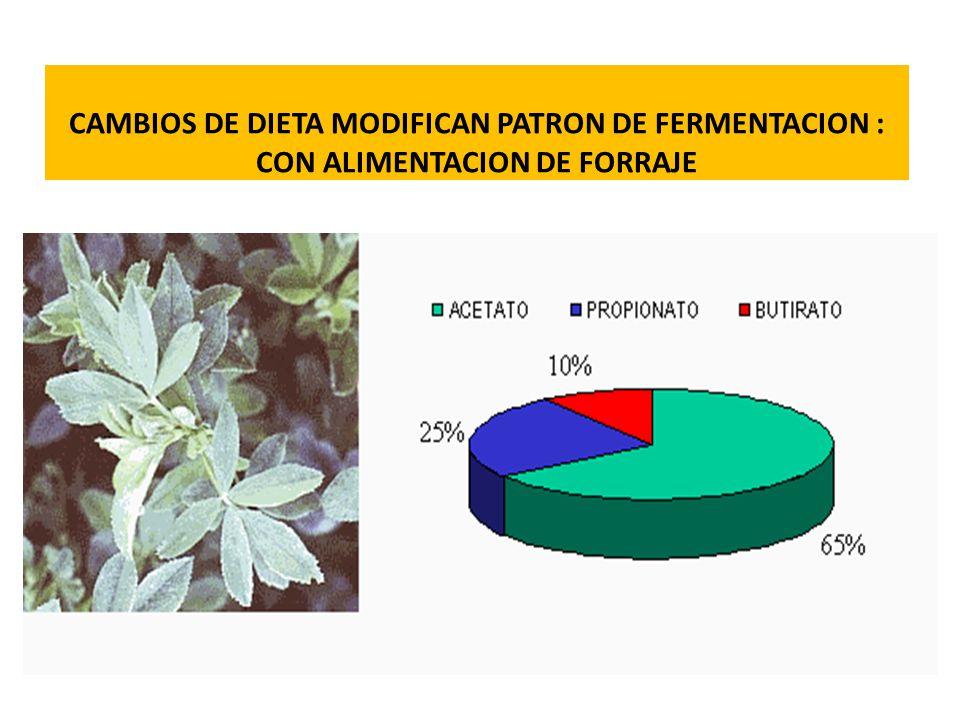 CAMBIOS DE DIETA MODIFICAN PATRON DE FERMENTACION : CON ALIMENTACION DE FORRAJE