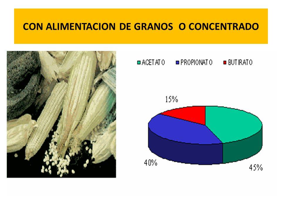 CON ALIMENTACION DE GRANOS O CONCENTRADO