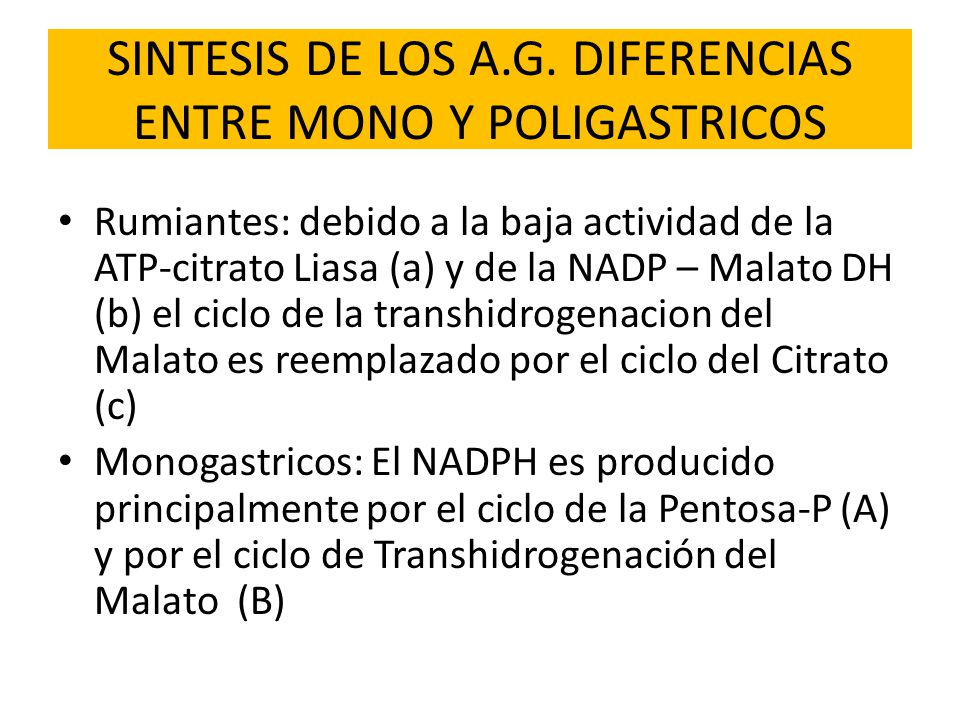SINTESIS DE LOS A.G. DIFERENCIAS ENTRE MONO Y POLIGASTRICOS Rumiantes: debido a la baja actividad de la ATP-citrato Liasa (a) y de la NADP – Malato DH