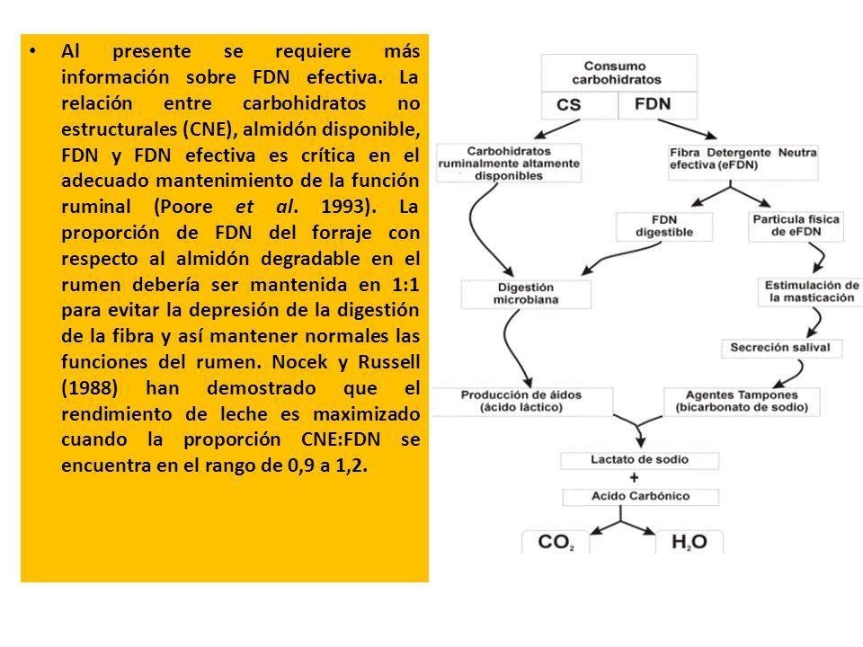 Al presente se requiere más información sobre FDN efectiva. La relación entre carbohidratos no estructurales (CNE), almidón disponible, FDN y FDN efec