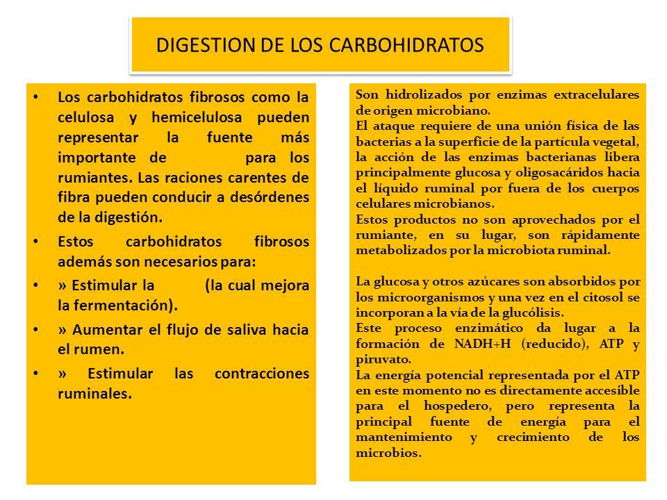 Los carbohidratos fibrosos como la celulosa y hemicelulosa pueden representar la fuente más importante de energía para los rumiantes. Las raciones car