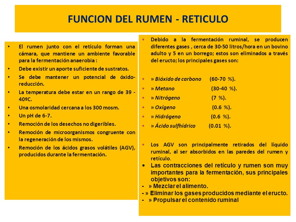 FUNCION DEL RUMEN - RETICULO El rumen junto con el retículo forman una cámara, que mantiene un ambiente favorable para la fermentación anaerobia : Deb