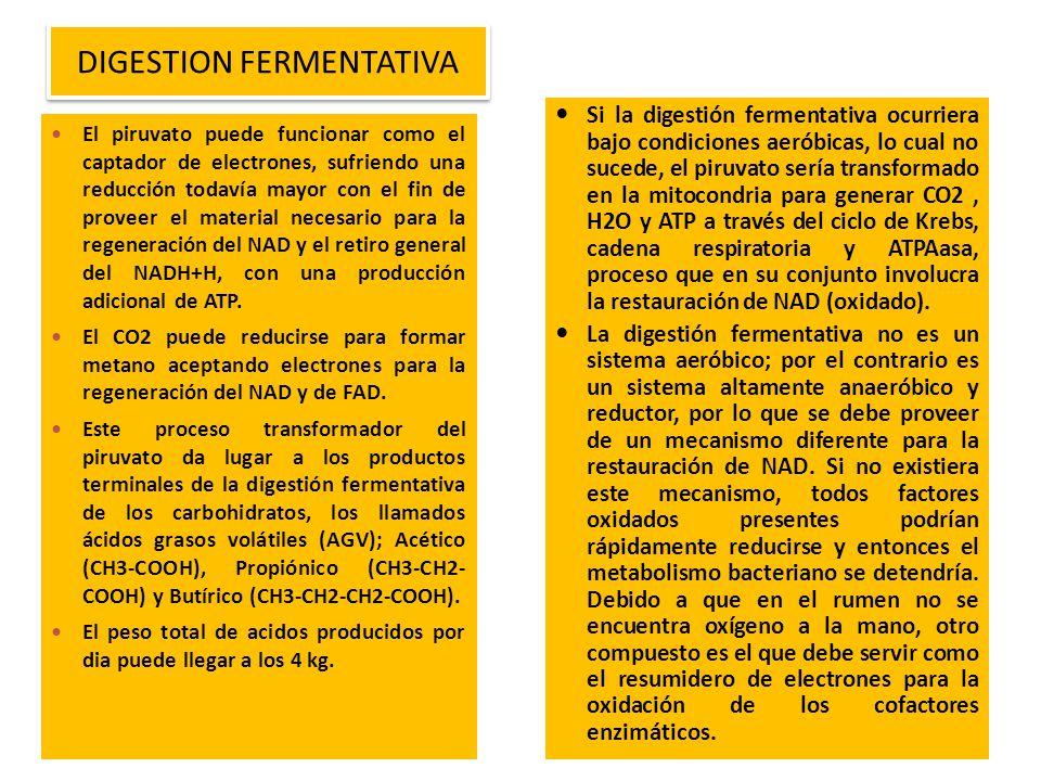 Si la digestión fermentativa ocurriera bajo condiciones aeróbicas, lo cual no sucede, el piruvato sería transformado en la mitocondria para generar CO