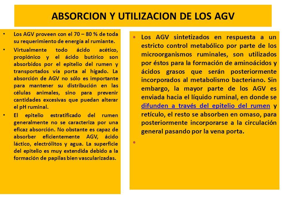 ABSORCION Y UTILIZACION DE LOS AGV Los AGV proveen con el 70 – 80 % de toda su requerimiento de energía al rumiante. Virtualmente todo ácido acético,