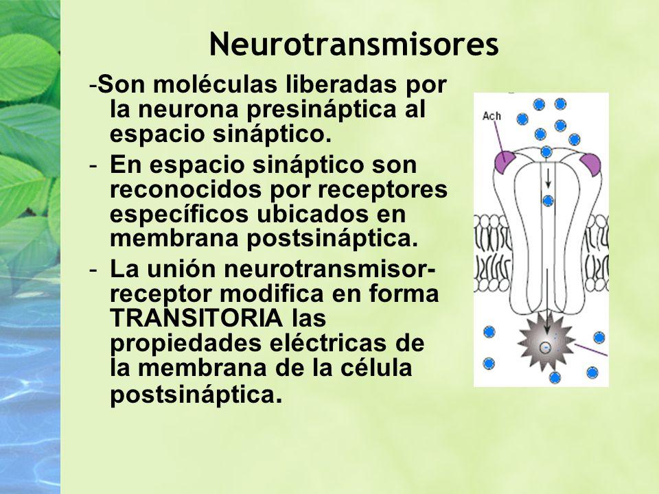 Neurotransmisores -Son moléculas liberadas por la neurona presináptica al espacio sináptico. -En espacio sináptico son reconocidos por receptores espe