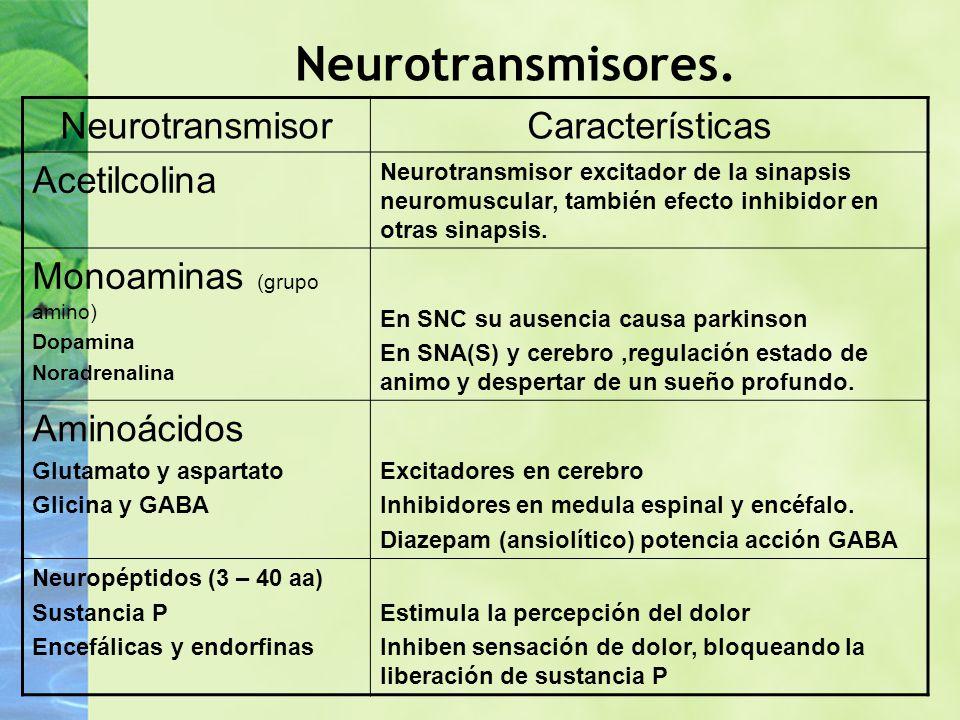 Neurotransmisores. NeurotransmisorCaracterísticas Acetilcolina Neurotransmisor excitador de la sinapsis neuromuscular, también efecto inhibidor en otr