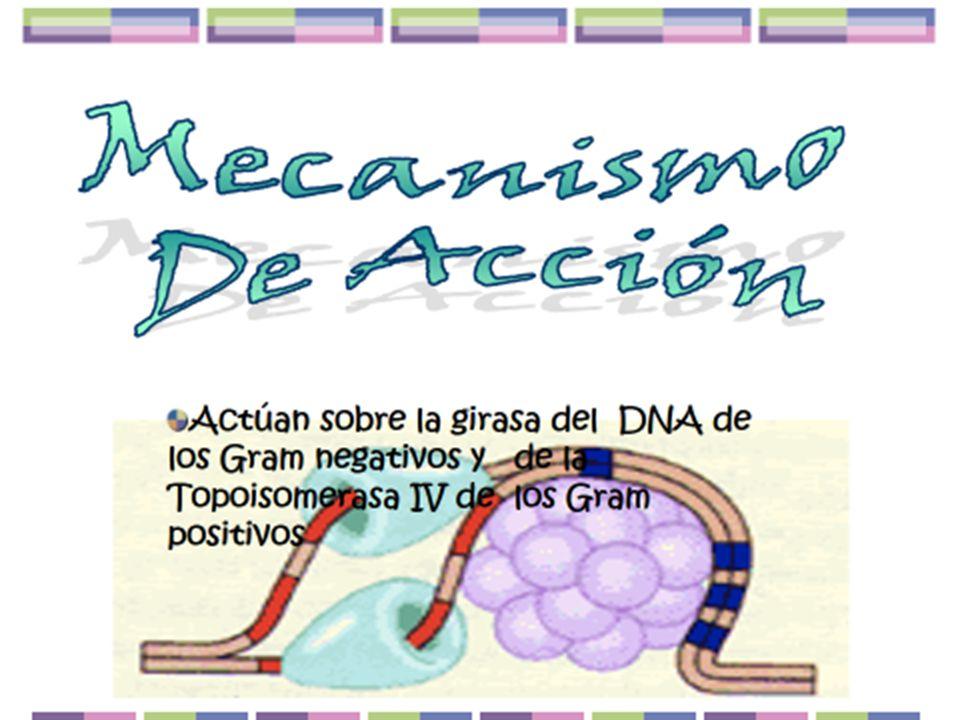 Citrobacter Klebsiella Serratia E.