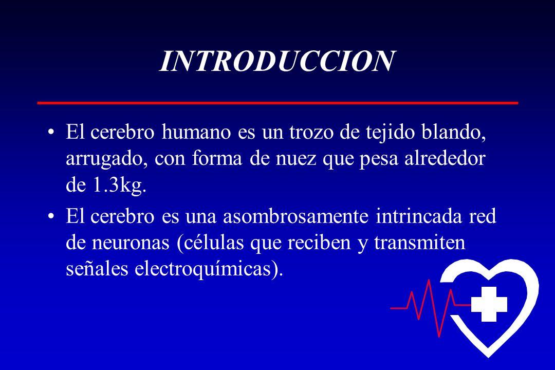 INTRODUCCION El cerebro humano es un trozo de tejido blando, arrugado, con forma de nuez que pesa alrededor de 1.3kg. El cerebro es una asombrosamente