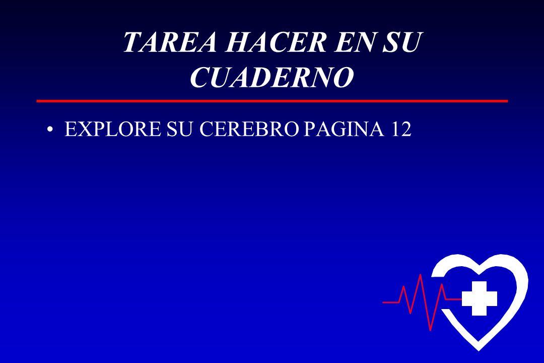 TAREA HACER EN SU CUADERNO EXPLORE SU CEREBRO PAGINA 12