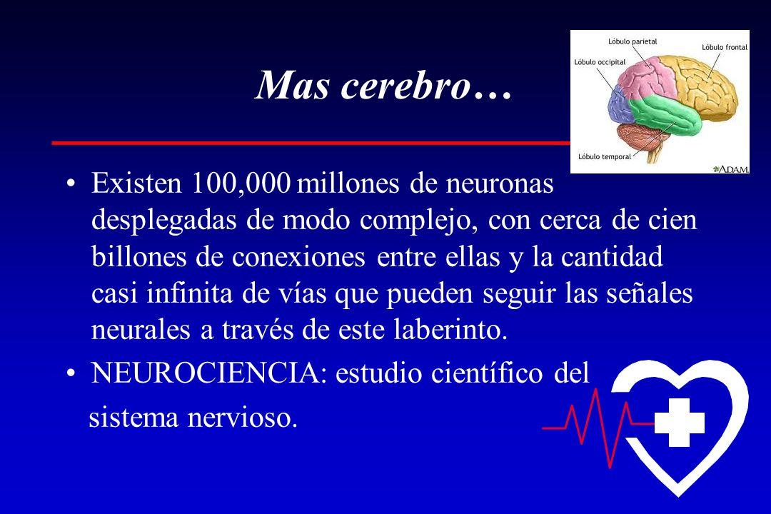 Mas cerebro… Existen 100,000 millones de neuronas desplegadas de modo complejo, con cerca de cien billones de conexiones entre ellas y la cantidad casi infinita de vías que pueden seguir las señales neurales a través de este laberinto.