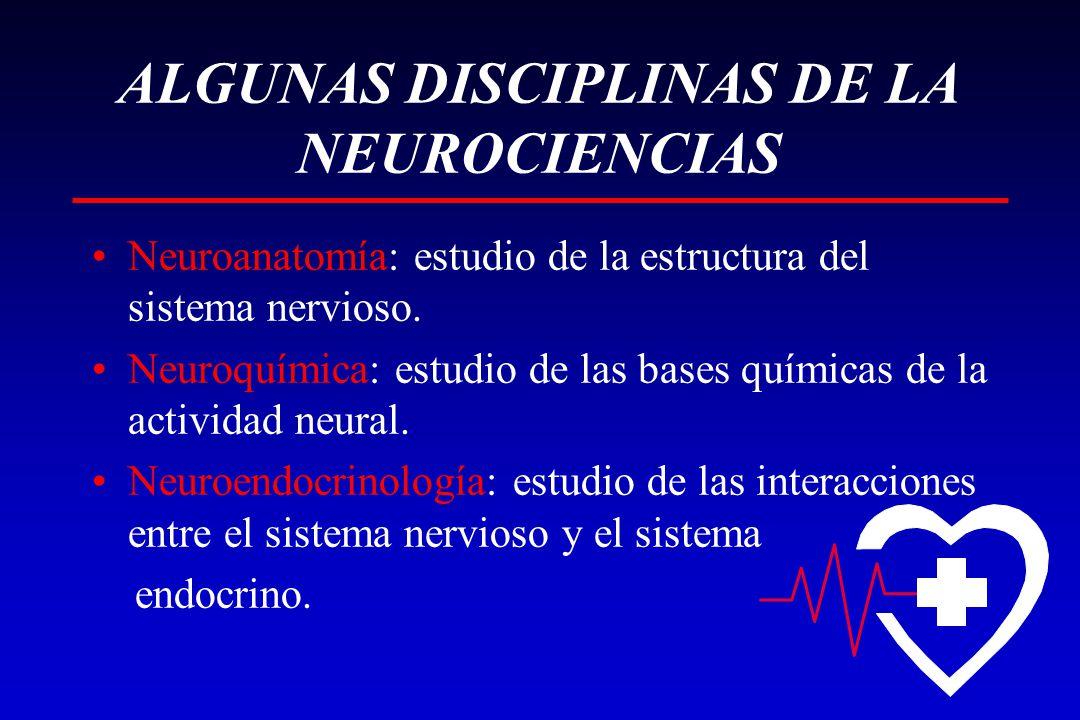 ALGUNAS DISCIPLINAS DE LA NEUROCIENCIAS Neuroanatomía: estudio de la estructura del sistema nervioso. Neuroquímica: estudio de las bases químicas de l