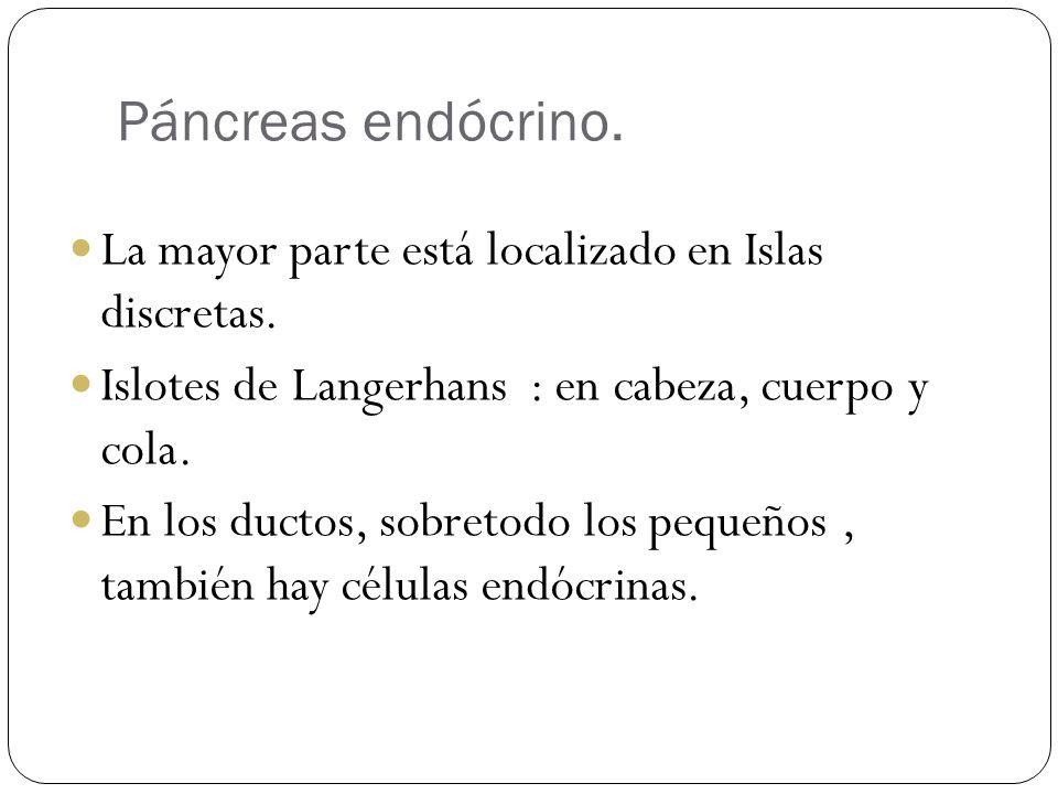 Páncreas endócrino. La mayor parte está localizado en Islas discretas. Islotes de Langerhans : en cabeza, cuerpo y cola. En los ductos, sobretodo los