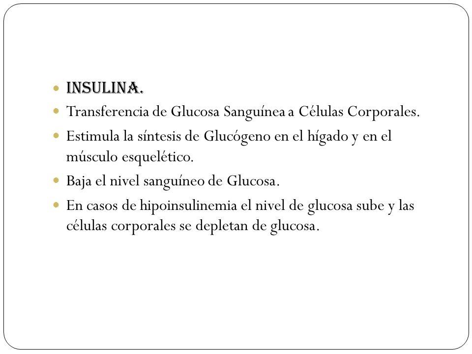 Insulina. Transferencia de Glucosa Sanguínea a Células Corporales. Estimula la síntesis de Glucógeno en el hígado y en el músculo esquelético. Baja el