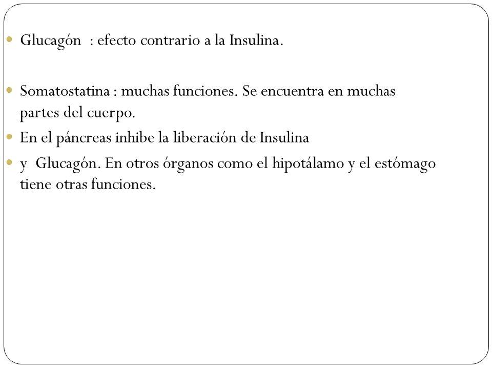 Glucagón : efecto contrario a la Insulina. Somatostatina : muchas funciones. Se encuentra en muchas partes del cuerpo. En el páncreas inhibe la libera