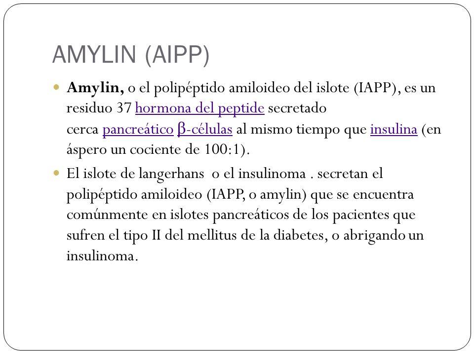 AMYLIN (AIPP) Amylin, o el polipéptido amiloideo del islote (IAPP), es un residuo 37 hormona del peptide secretado cerca pancreático β -células al mismo tiempo que insulina (en áspero un cociente de 100:1).hormona del peptidepancreático β -célulasinsulina El islote de langerhans o el insulinoma.