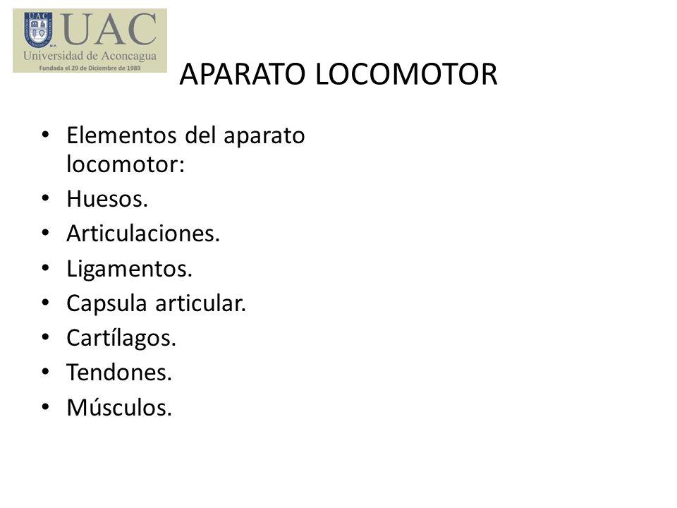 APARATO LOCOMOTOR Elementos del aparato locomotor: Huesos. Articulaciones. Ligamentos. Capsula articular. Cartílagos. Tendones. Músculos.