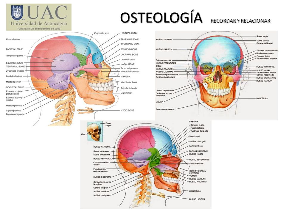 OSTEOLOGÍA RECORDAR Y RELACIONAR OSTEOLOGÍA RECORDAR Y RELACIONAR