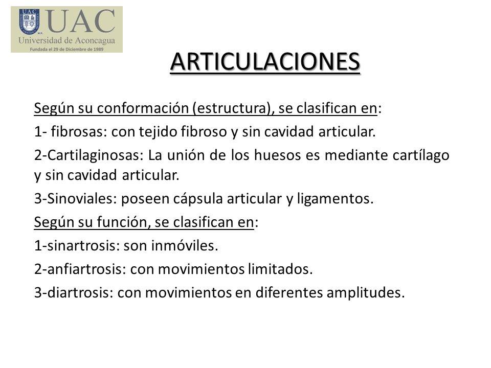 ARTICULACIONES Según su conformación (estructura), se clasifican en: 1- fibrosas: con tejido fibroso y sin cavidad articular. 2-Cartilaginosas: La uni
