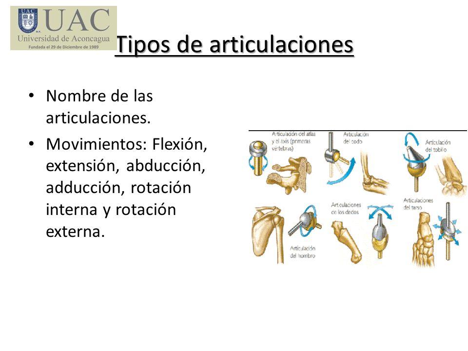 Tipos de articulaciones Nombre de las articulaciones. Movimientos: Flexión, extensión, abducción, adducción, rotación interna y rotación externa.