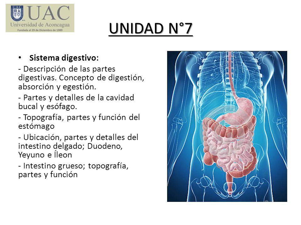 UNIDAD N°7 Sistema digestivo: - Descripción de las partes digestivas. Concepto de digestión, absorción y egestión. - Partes y detalles de la cavidad b