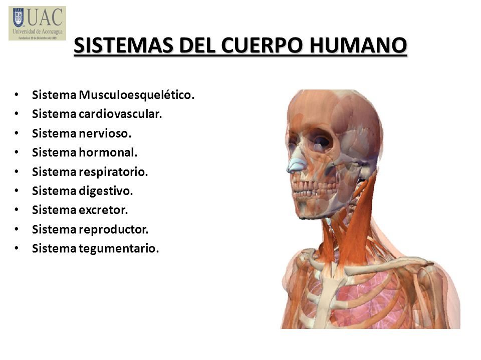 SISTEMAS DEL CUERPO HUMANO Sistema Musculoesquelético. Sistema cardiovascular. Sistema nervioso. Sistema hormonal. Sistema respiratorio. Sistema diges