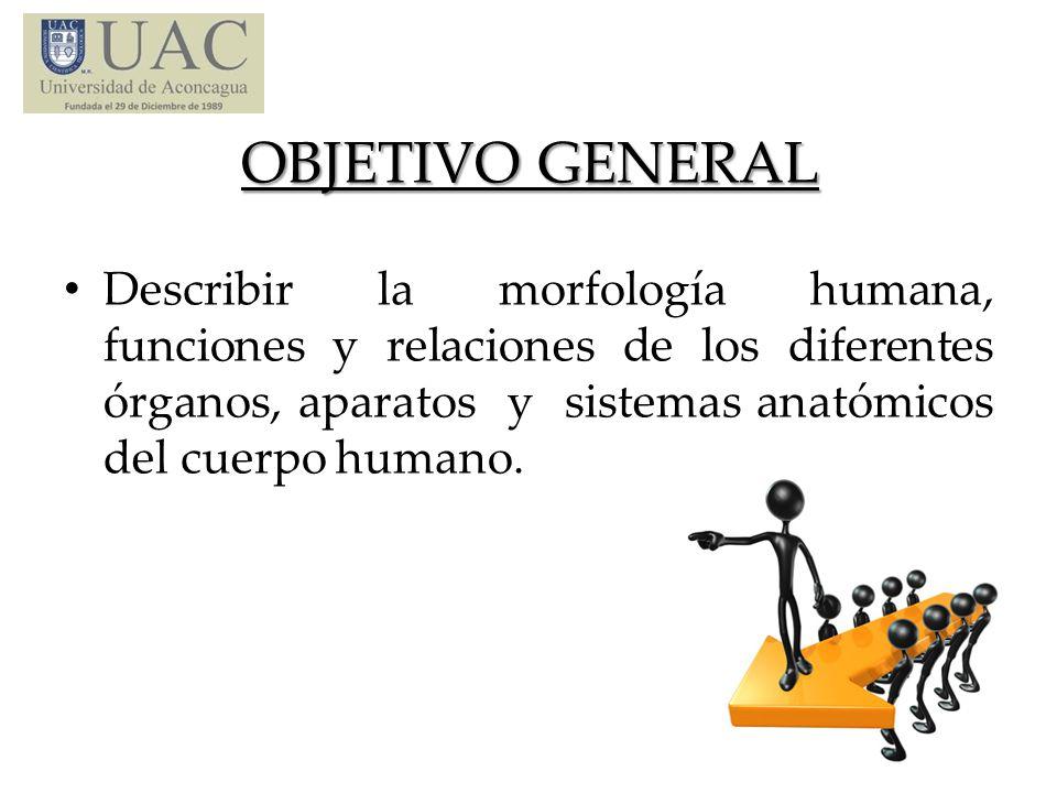 OBJETIVO GENERAL Describir la morfología humana, funciones y relaciones de los diferentes órganos, aparatos y sistemas anatómicos del cuerpo humano.