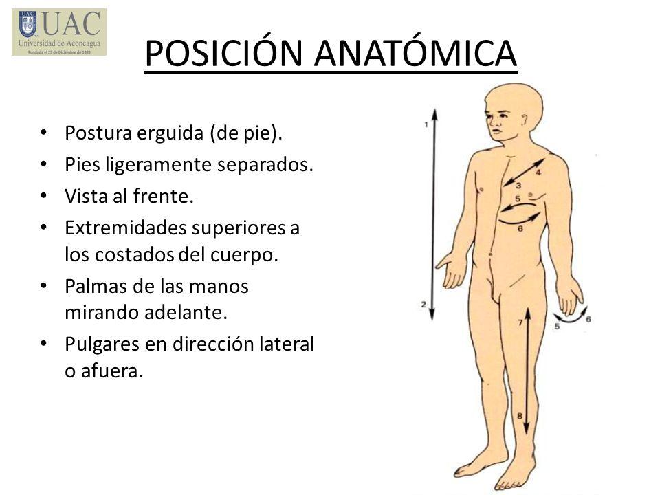 POSICIÓN ANATÓMICA Postura erguida (de pie). Pies ligeramente separados. Vista al frente. Extremidades superiores a los costados del cuerpo. Palmas de